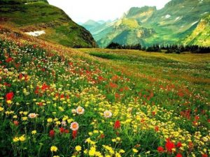 Cum alegem florile pentru o inmormantare?
